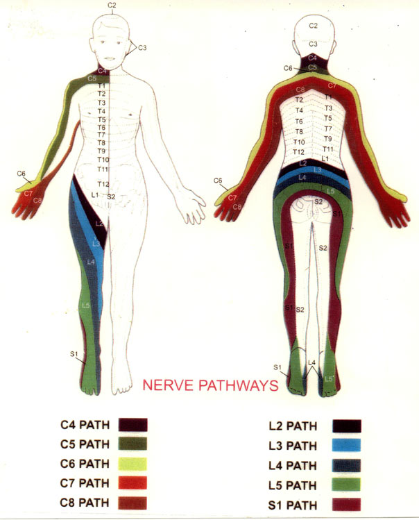 Printable Charts Nerve Pathways